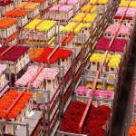 Aalsmeer y las famosas subastas de flores
