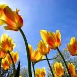 Fotos del Keukenhof, el paraiso de las flores