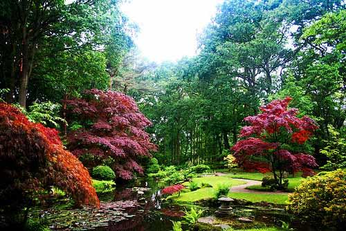 la-haya_jardin-japones