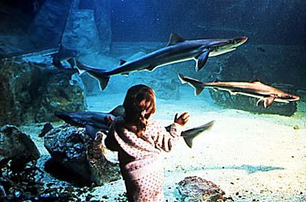 Sea Life Scheveningen, La haya