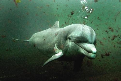 Dolfinarium, parque de mamíferos marinos