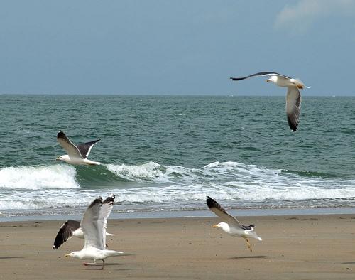 Las playas de Zeeland