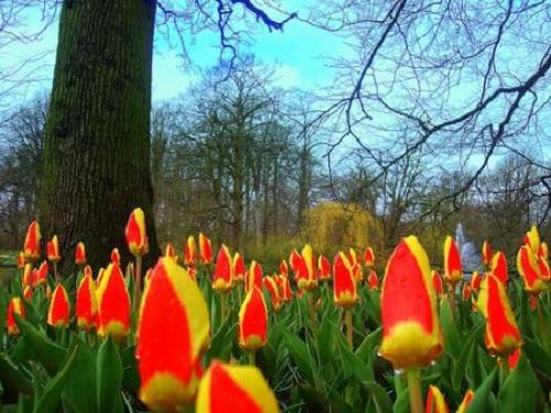 Festival de la Primavera y tres eventos en Utrecht