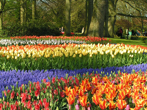 Visita holanda en primavera - Jardines de tulipanes en holanda ...