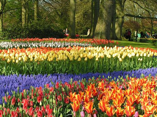 Visita holanda en primavera for Jardines de primavera
