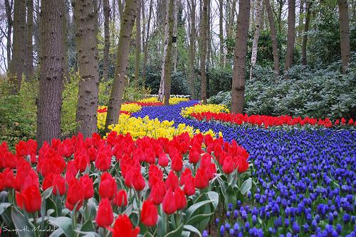 C mo llegar a los jardines keukenhof for Que es un jardin ornamental