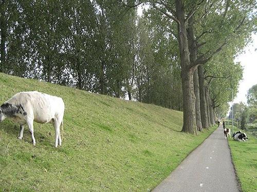 La línea de defensa de Ámsterdam